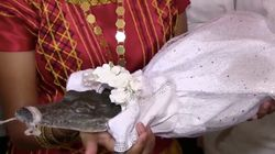 Mexican Mayor Weds Crocodile To Bring Good Luck To His
