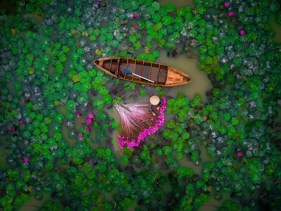 "<strong>Second place, ""Waterlily"" by a user named helios1412, <br>Vietnam. </strong>Dronestagram does not offer much inf"