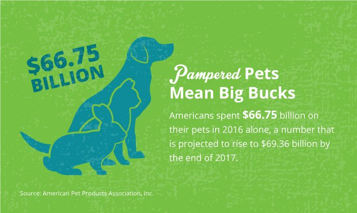 Fireworks Cause Huge Uptick in Animal Shelter Intake