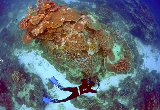 A ranger inspects the Great Barrier Reef near Lady Elliot Island, Australia. The reef experienced...