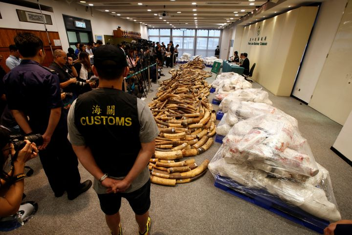 Ivory tusks seized by Hong Kong customs agents are displayed at a news conference in Hong Kong on July 6.