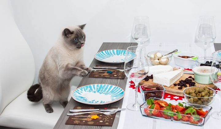 Entertaining Guests with a Cat