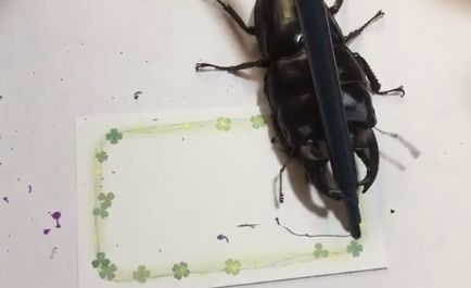 People Are Very Impressed With This Stag Beetle Who Creates