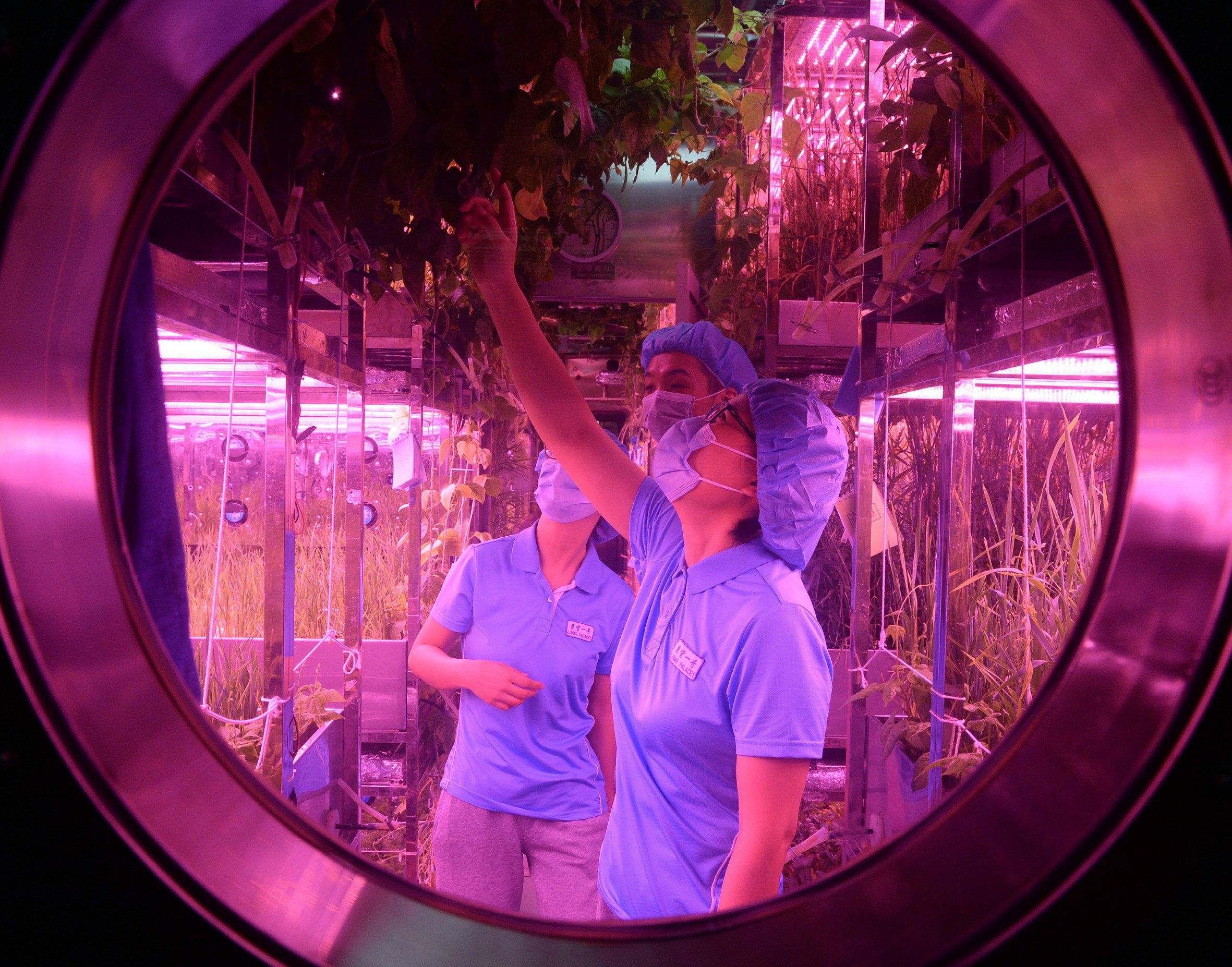 Student volunteers are seen inside the Lunar Palace 1, a laboratory simulating a lunar-like environment, in Beijing on May 10, 2017.   Chinese students will live in the laboratory simulating a lunar-like environment for up to 200 days as Beijing prepares for its long-term goal of putting humans on the moon. Four postgraduate students from the capital's astronautics research university Beihang entered the 160-square-metre (1,720-square-foot) cabin -- dubbed the 'Yuegong-1', or 'Lunar Palace' -- on May 10, state media reported. / AFP PHOTO / STR / China OUT        (Photo credit should read STR/AFP/Getty Images)