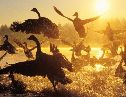 <p>Wild Geese, Mary Oliver</p>