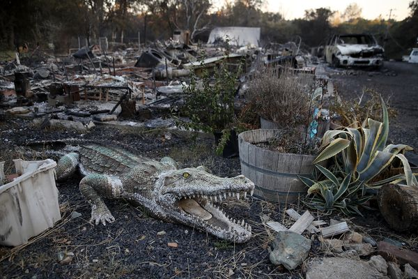 An alligator statue sits next to a home that was destroyed by the Wall Fire on July 9, 2017 in Oroville, California.