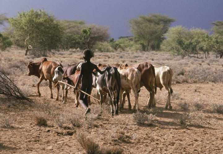 Many children in Turkana tend livestock rather than attend school