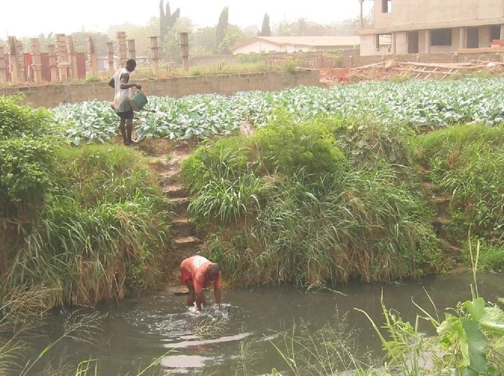 Farmers in the booming Ghanaian capital of Accra irrigate leafy greens with water from a nearby stream.
