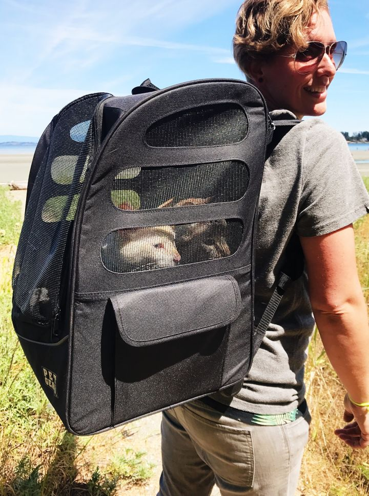 Me and the cats - this is how they travel while we're out exploring. My back is getting strong :)