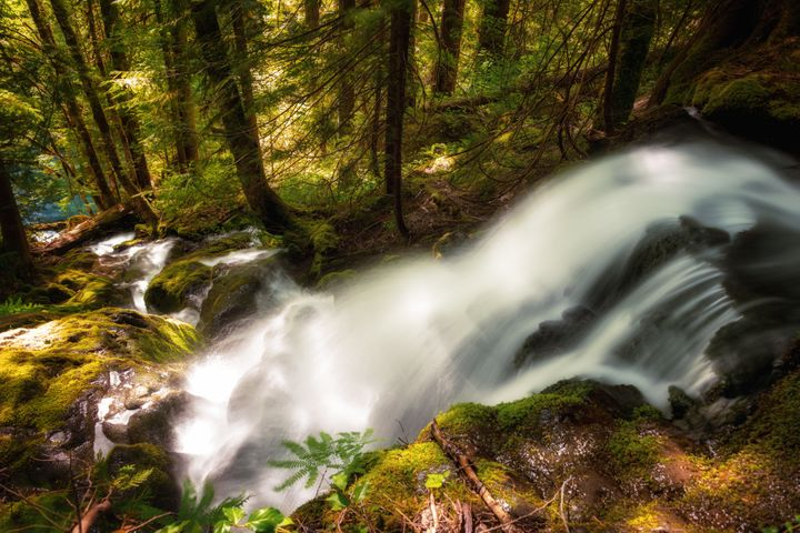 A beautiful nameless waterfall in Mount Rainier National Park - a gift of Spring