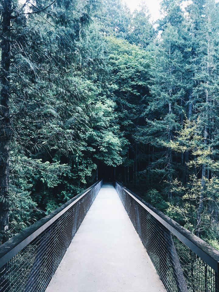 Into the Woods. Englishman River Falls, Vancouver Island