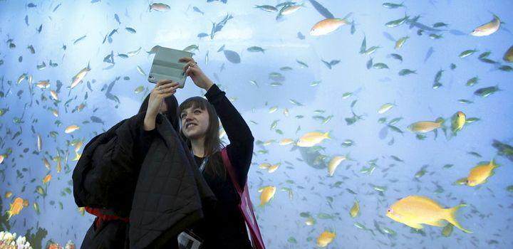 In the fish-rich Maldives, marine life is also a tourist attraction. Fabrizio Bensch/Reuters