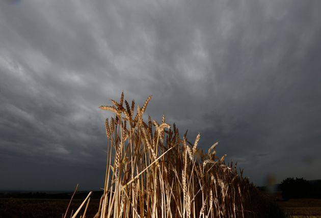 Cloud cover and excess rain are causing major fluctuations in global wheat