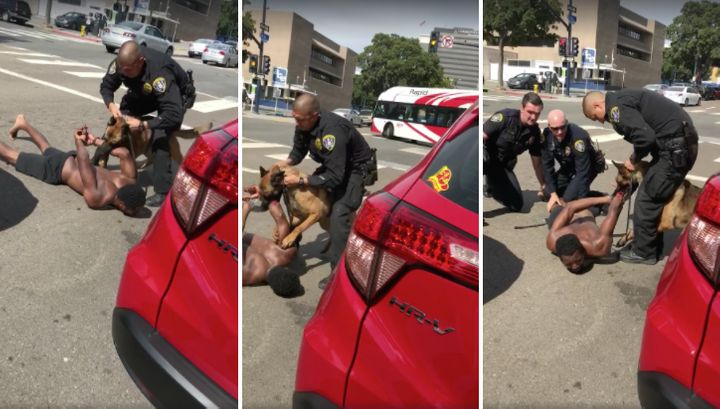 A police dog is seen clamping down on a suspect's bloodied arm as he lies handcuffed and screaming on the ground.