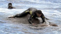 Elephant Rescued After Being Dragged Out To Sea By Strong