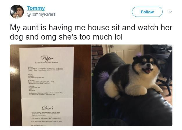 This Woman's Rules For Dog-Sitting Her Pomeranian Are Amazingly Extra