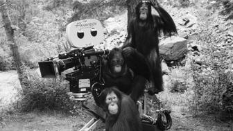 Three orangutans sitting on a film caddy in the background in a scene from the film 'Any Which Way But Loose', 1978. (Photo by Warner Brothers/Getty Images)