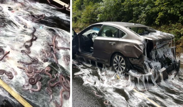 A slimy crash closed Highway 101 in Oregon.