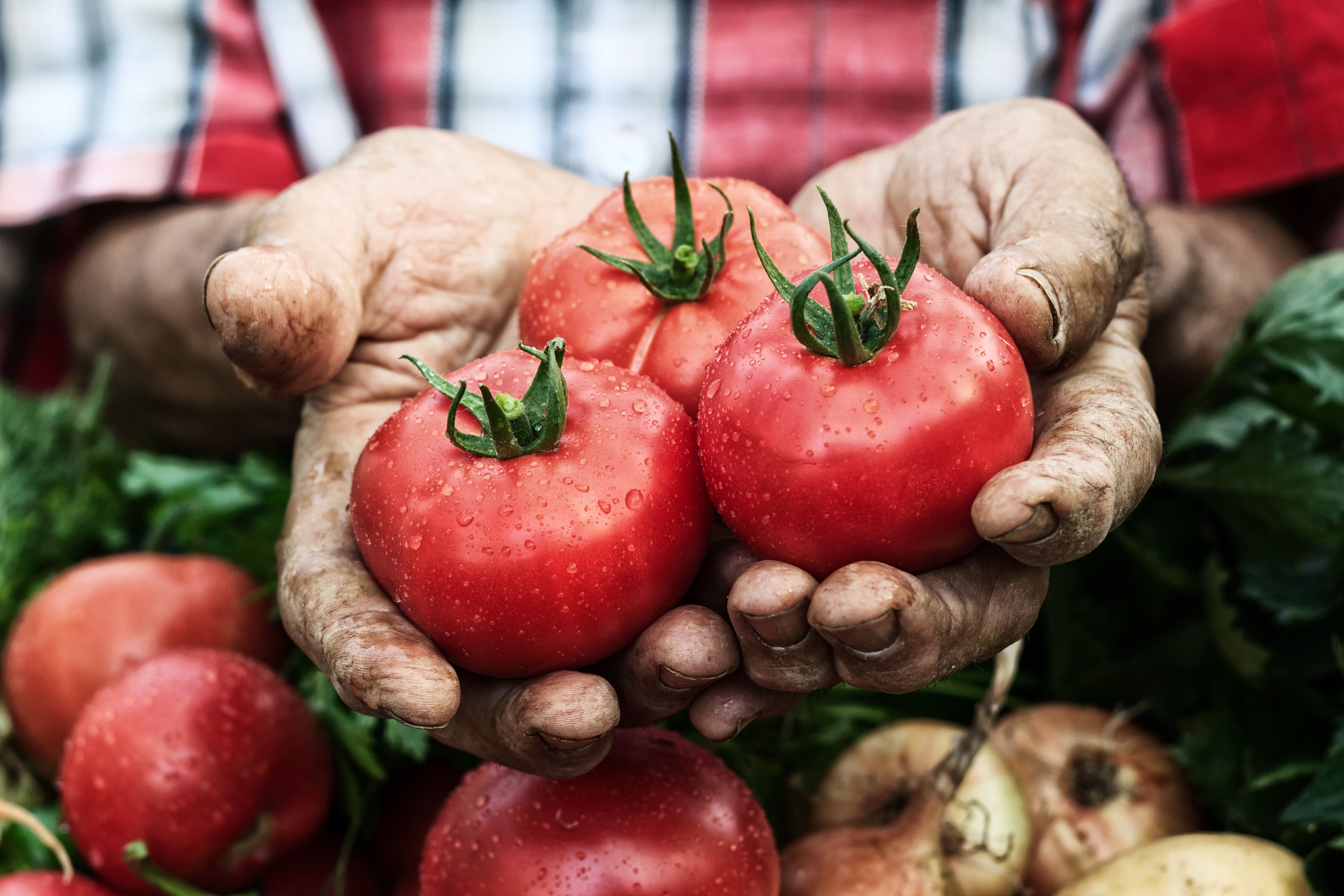 A Diet Rich In Tomatoes Cut Skin Cancer Rates By Half, But Only In Male