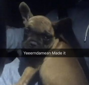 United Airlines Misplaces Rapper Schoolboy Q's French Bulldog