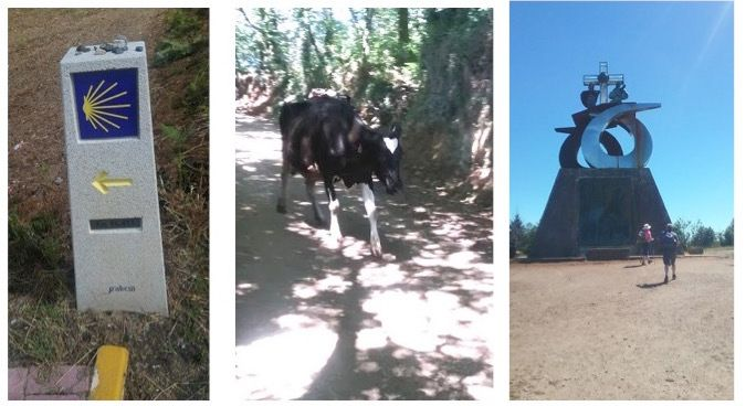 <p>A trail marker, cows on the trail, and a modern monument for pilgrims at the outskirts of Santiago that signals the journey is almost completed.</p>