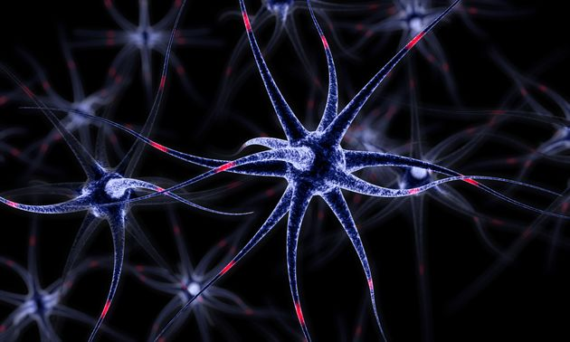Alzheimer's Could Be 'Tackled By Boosting Brain's Disposal