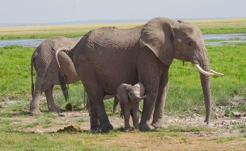 <em>Elephant with baby atMaasai Mara National Reserve</em>