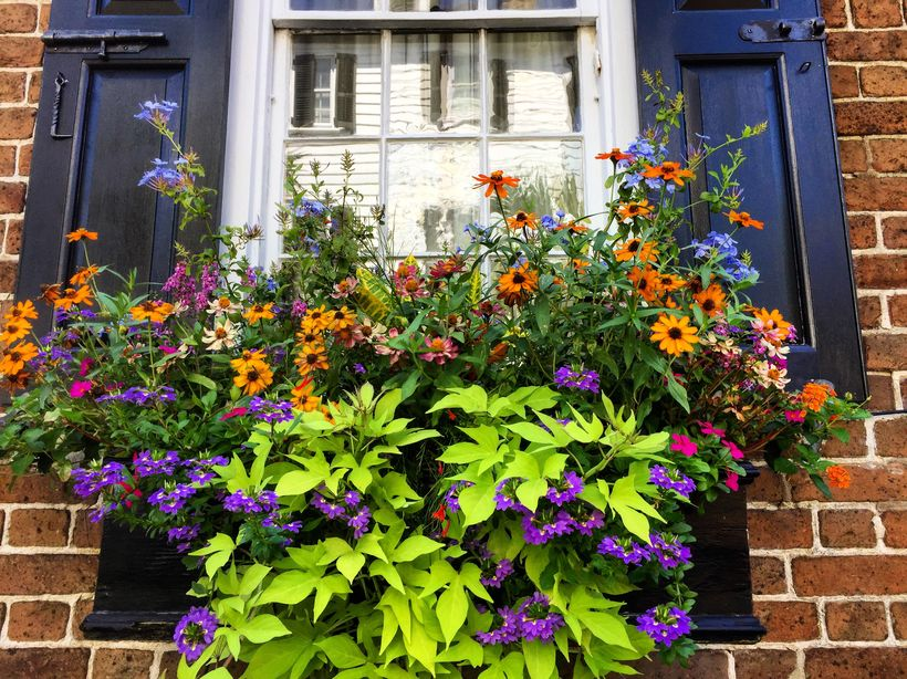 There are hundreds of flower baskets in Charleston — an addition to the city that may not be historically accurate, but adds