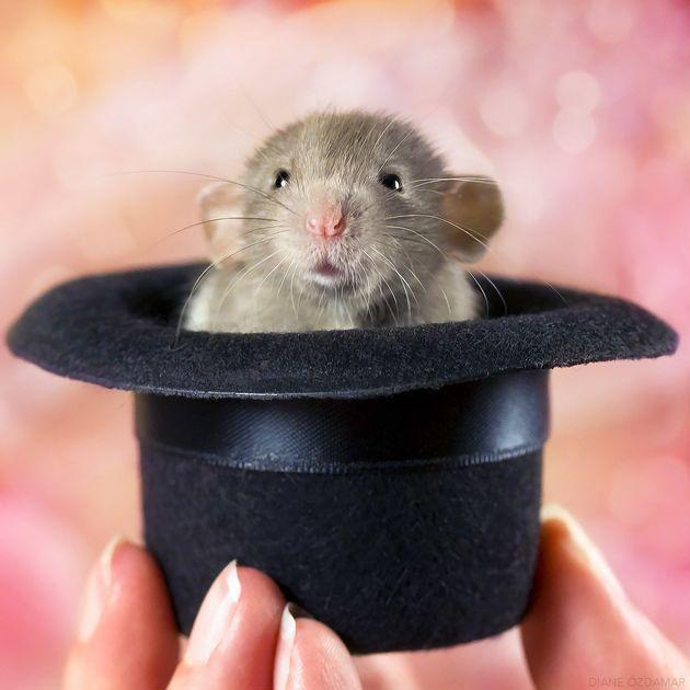 えっ、ネズミってこんなに可愛かったの?