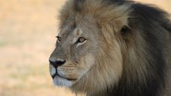 Cecil The Lion's Son Xanda Shot Dead In Zimbabwe By Big Game