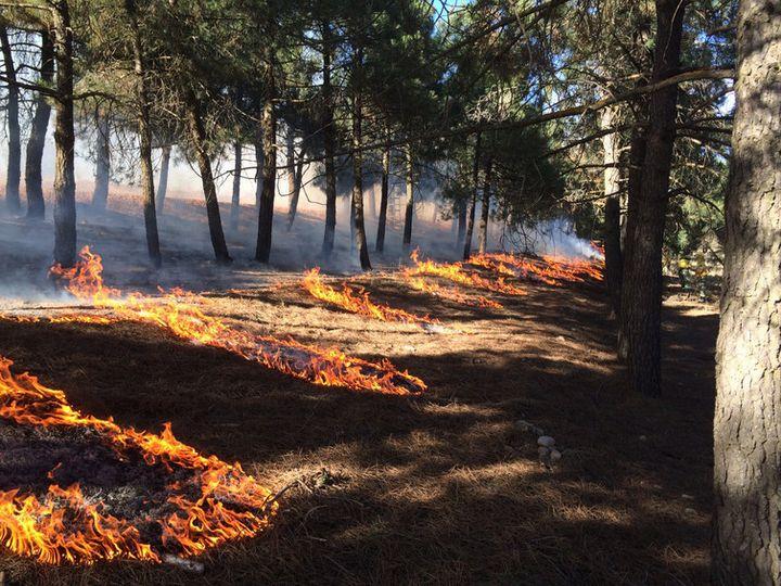 Planned burning is undertaken in Albacete, in east-central Spain.