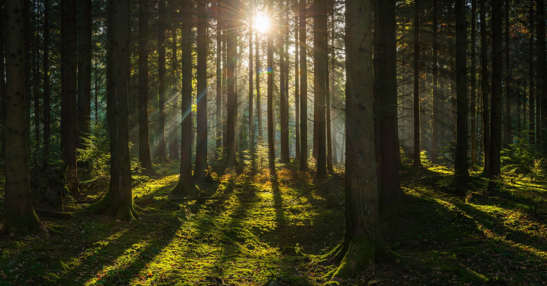 Restoring U.S. Forests Can Help Solve Our Water