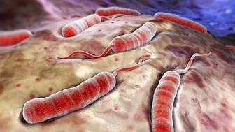 Cholerae bacteria which causes cholera.