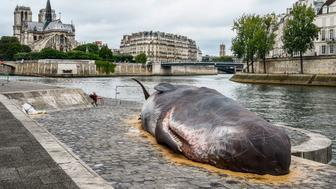 TOPSHOT - A sculpture of a life-size hyperreal sperm whale by Belgian Collective Captain Boomer, is pictured on Quai de la Tournelle in downtown Paris on July 22, 2017 as part of the promotion of the festival 'Paris l'Ete' (Paris in the Summer).  / AFP PHOTO / bertrand GUAY        (Photo credit should read BERTRAND GUAY/AFP/Getty Images)