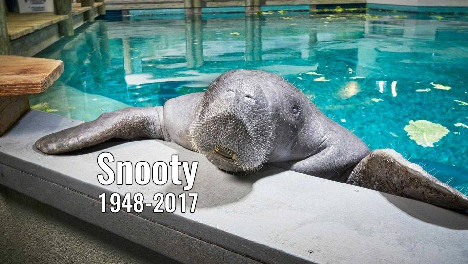 Snooty died in an accident on Sunday. He was 69.