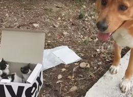 This Dog Found A Box Of Tiny Abandoned Kittens And Became Their Foster Dad