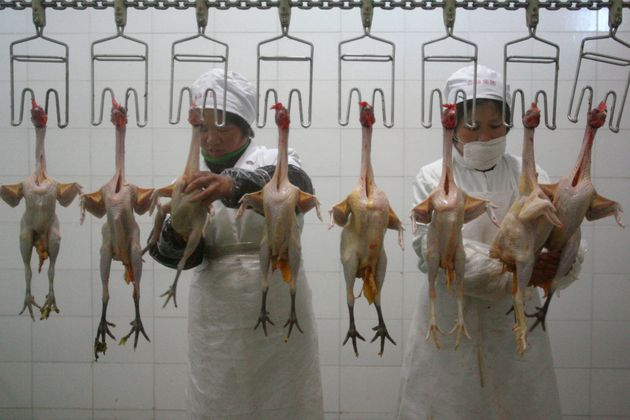 Chlorinated chicken is common in the US. The process is used worldwide, but banned in the EU (stock
