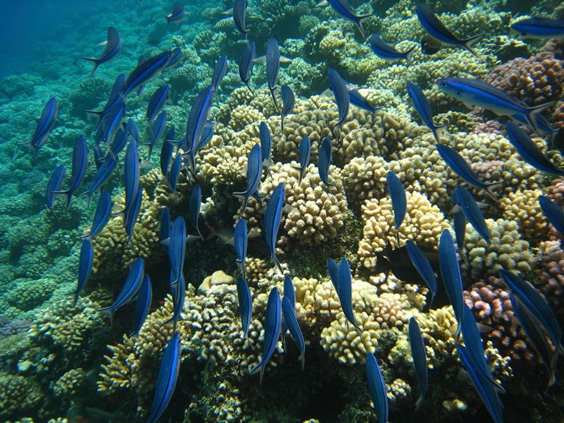 <strong>Coral reefs are hugely important for both marine biodiversity and for artisanal fisheries.</strong>