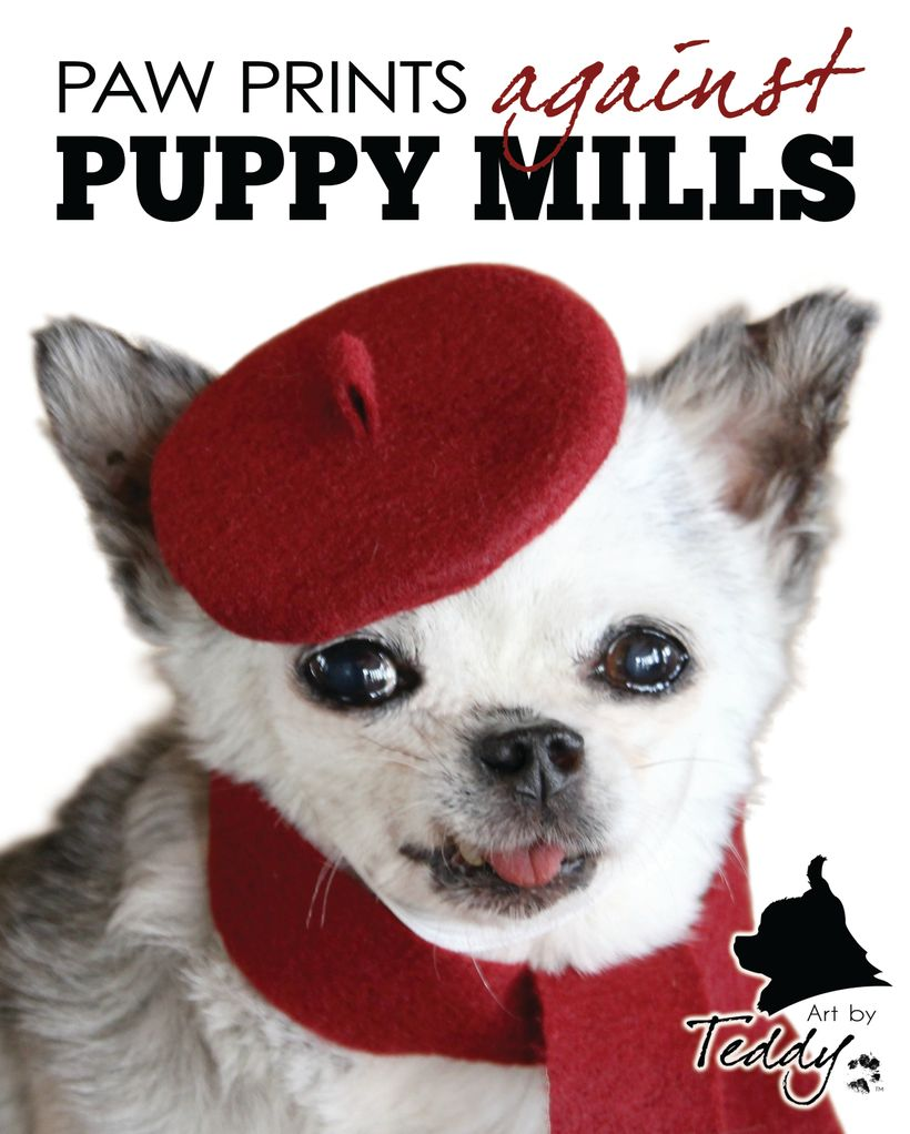 Paw Prints Against Puppy Mills