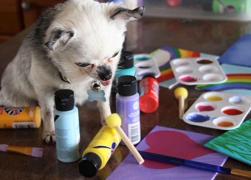 Teddy, puppy mill survivor and artist, hard at work