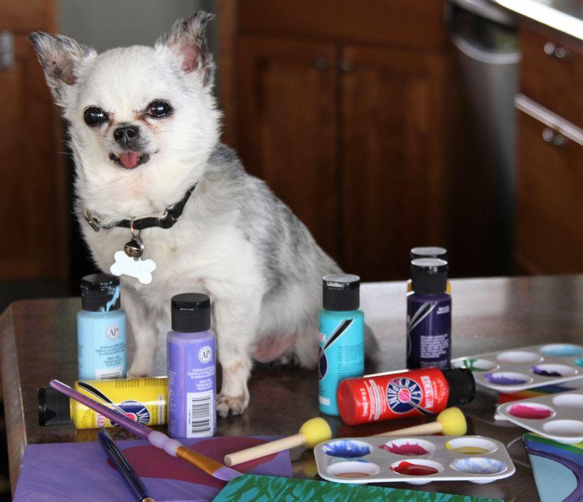 Teddy, puppy mill survivor and artist