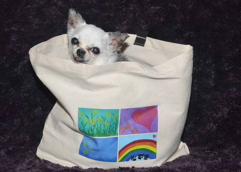 Teddy modeling at tote bag which includes images of his latest collection of paw print art