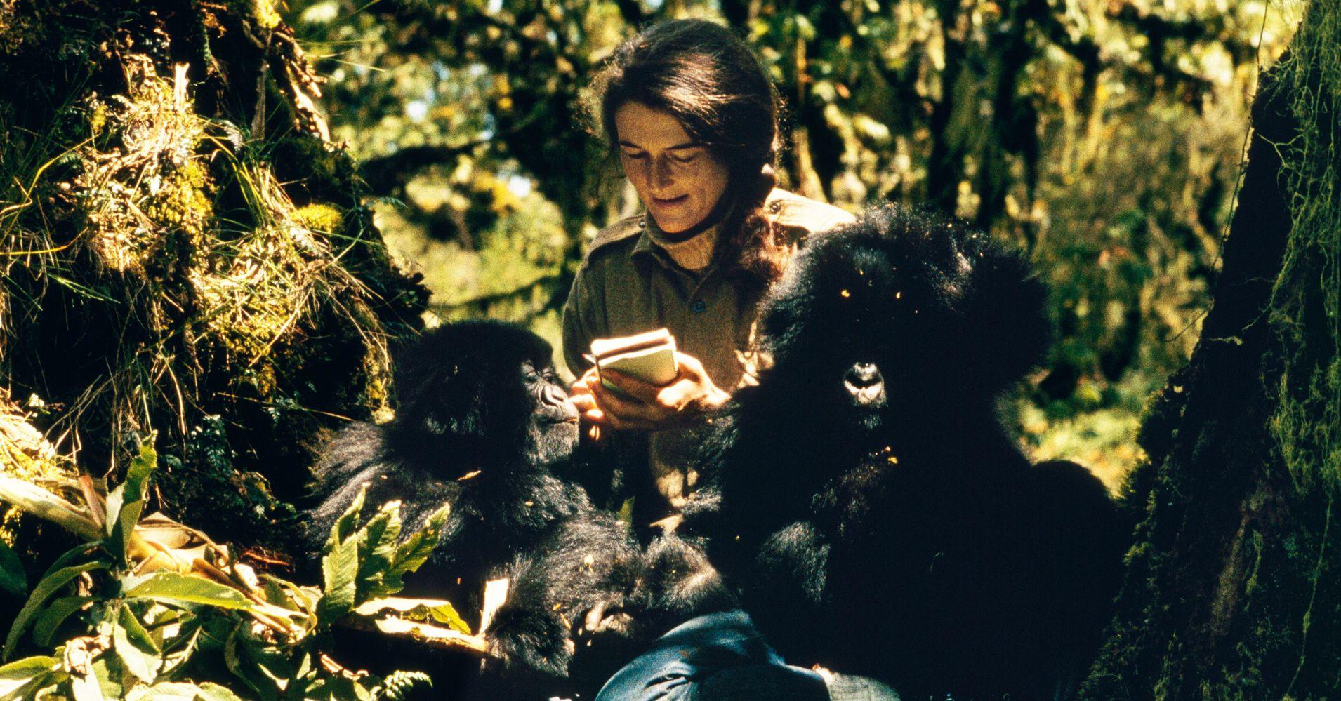 Slain 'Gorilla's In The Mist' Primatologist Dian Fossey Featured In New Series