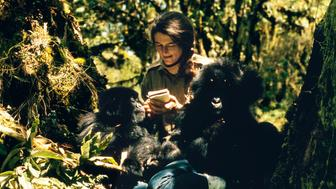 Dian Fossey with Pucker Puss, a captive two-year-old female, and Coco, a 16-mon th-old male.  Fossey nursed both youngsters to health after their capture and i mprisonment by local people for sale to the Cologne Zoo. (photo credit: ROBERT I.M. CAMPBELL)