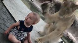 Baby Completely Oblivious As Lion Tried To Attack Him At Utah