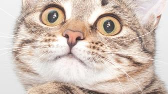 Thoughtful striped cat face. Cute kitten portrait