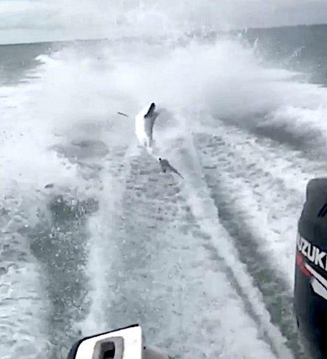 Violent Video Of Boat Dragging Shark Sparks Outrage,
