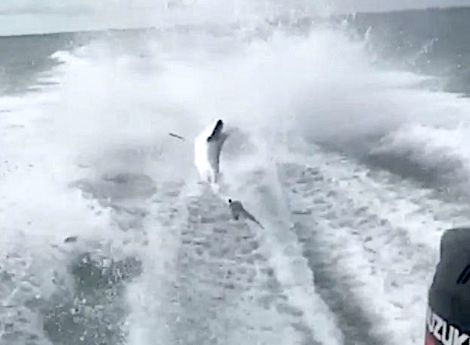Video of a speeding boat violently dragging a shark went viral on Monday. Now, conservation officials...