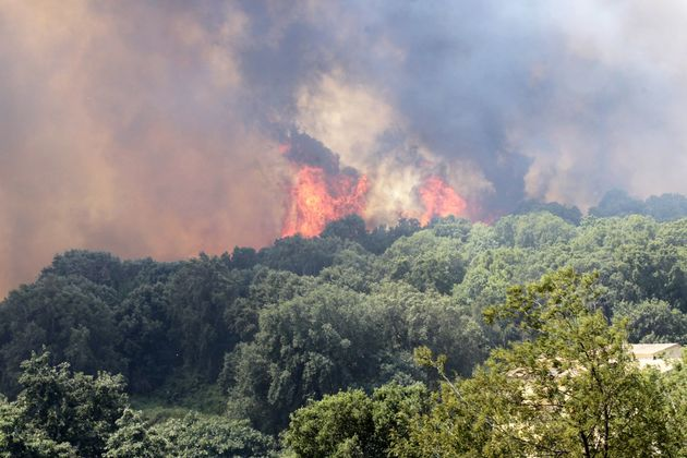 A blaze burns the forest in Ortale de Biguglia, on the French Mediterranean island of