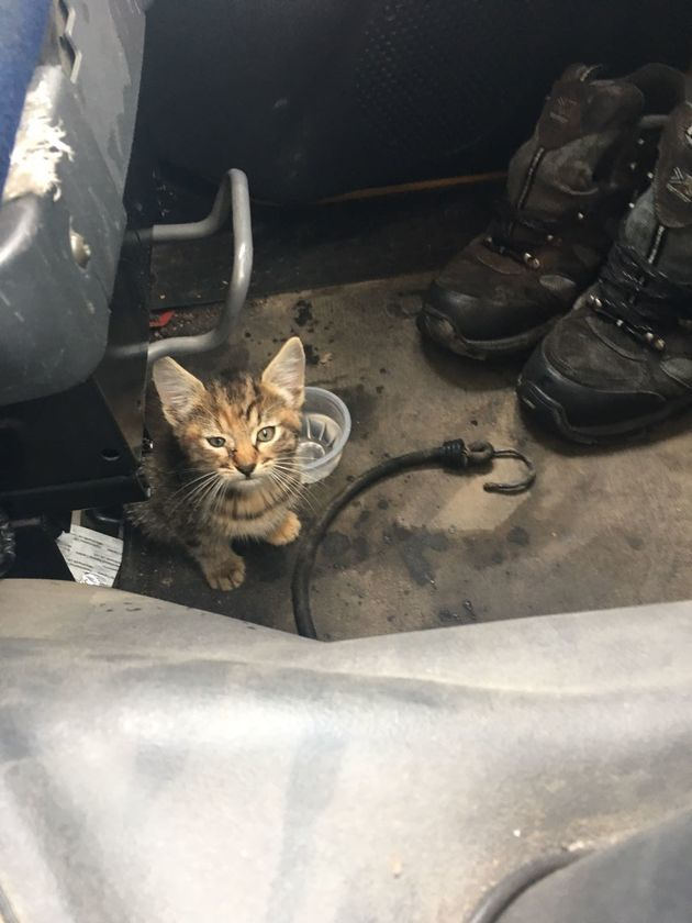 Lorry Driver Rescues Kitten From Landfill Site And Gives Her The Forever Home She